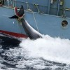 Iran attempts to revive flagging 'evil' image with new whaling program