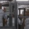 Egypt accuses Al Jazeera of biased, pro-Muslim Brotherhood coverage of Al Jazeera trial
